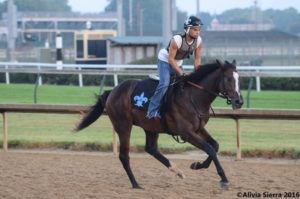 Susan's Racehorse Getting a Workout