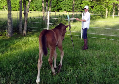 Susan's Young Racehorse